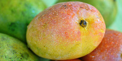 mango fruits exporter in sri lanka